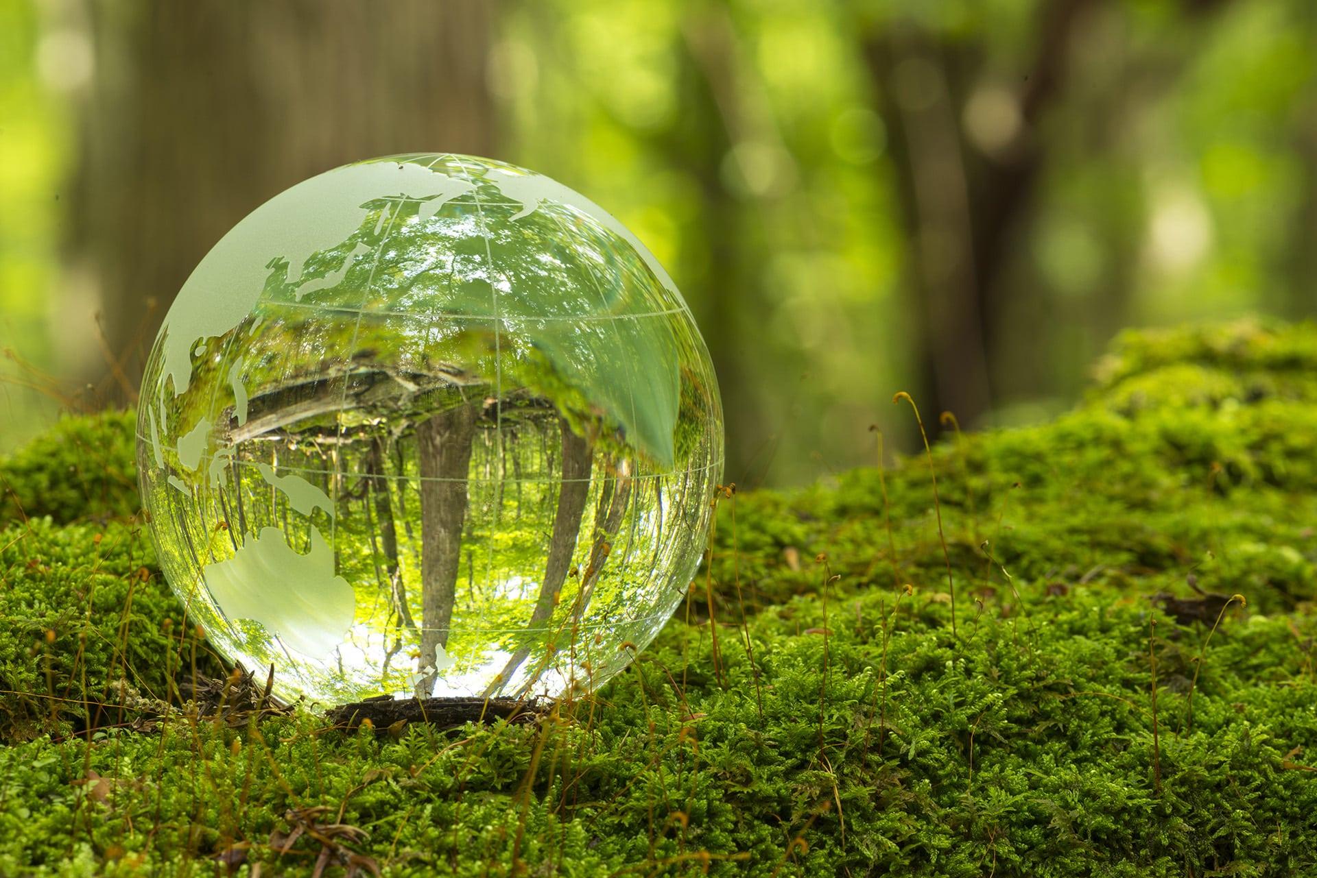 bille de verre dans la forêt
